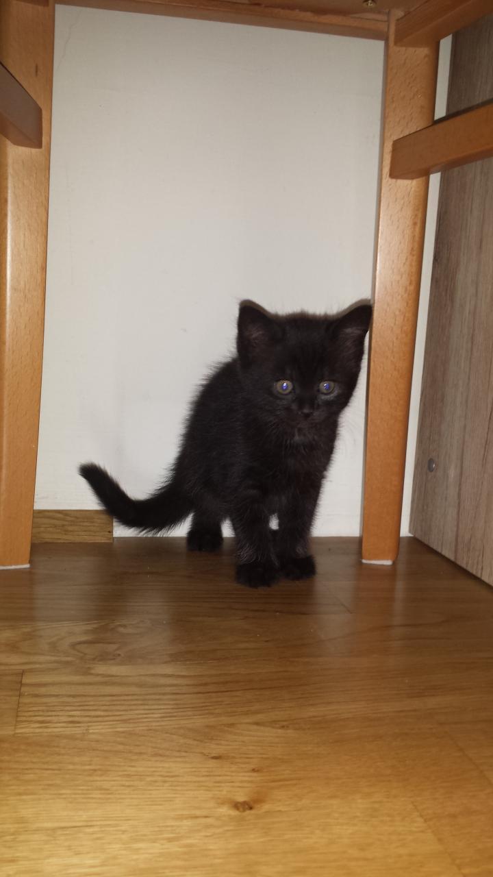 Gartenmobel Outlet Roth : Katze zu vergeben  Babyforumat